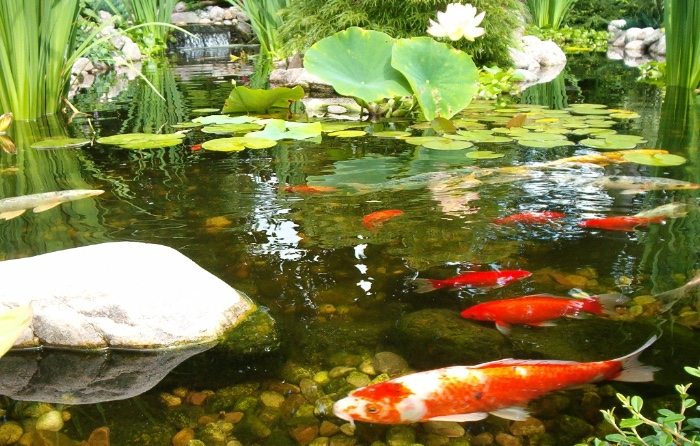 Philadelphia Fish Pond